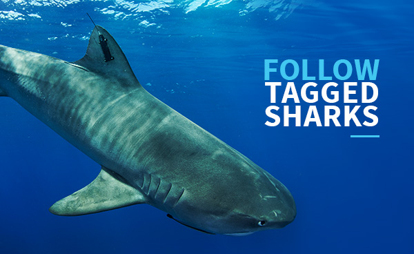 Follow Tagged Sharks