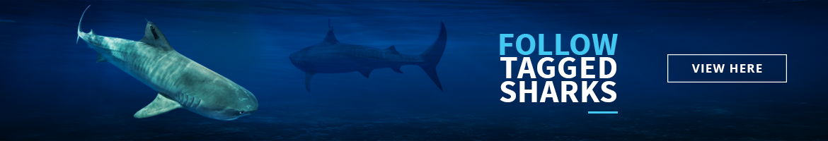 Tagged.Sharks.banner